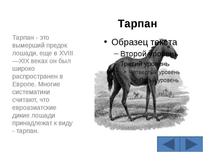 Тарпан Тарпан - это вымерший предок лошади, еще в XVIII—XIX веках он был широ...
