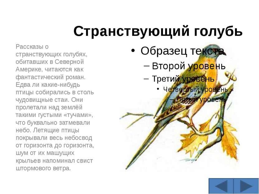 Странствующий голубь Рассказы о странствующих голубях, обитавших в Северной А...