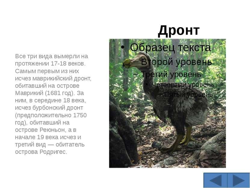 Дронт Все три вида вымерли на протяжении 17-18 веков. Самым первым из них исч...