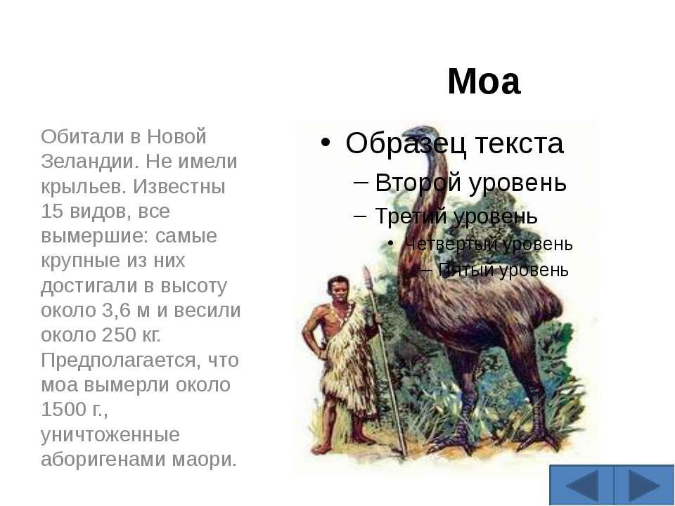 Моа Обитали в Новой Зеландии. Не имели крыльев. Известны 15 видов, все вымерш...