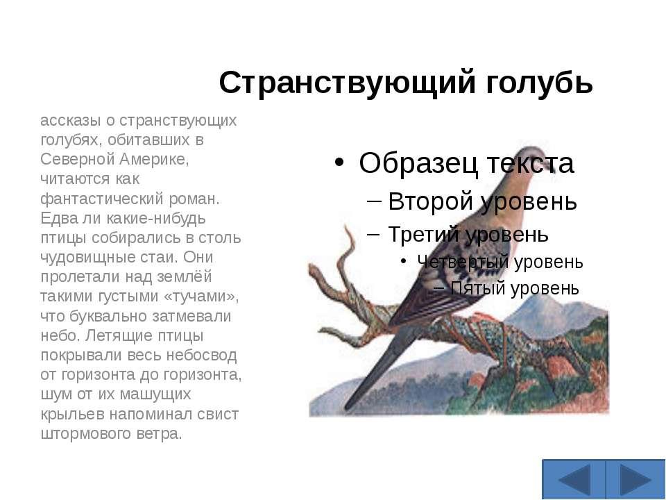 Странствующий голубь ассказы о странствующих голубях, обитавших в Северной Ам...