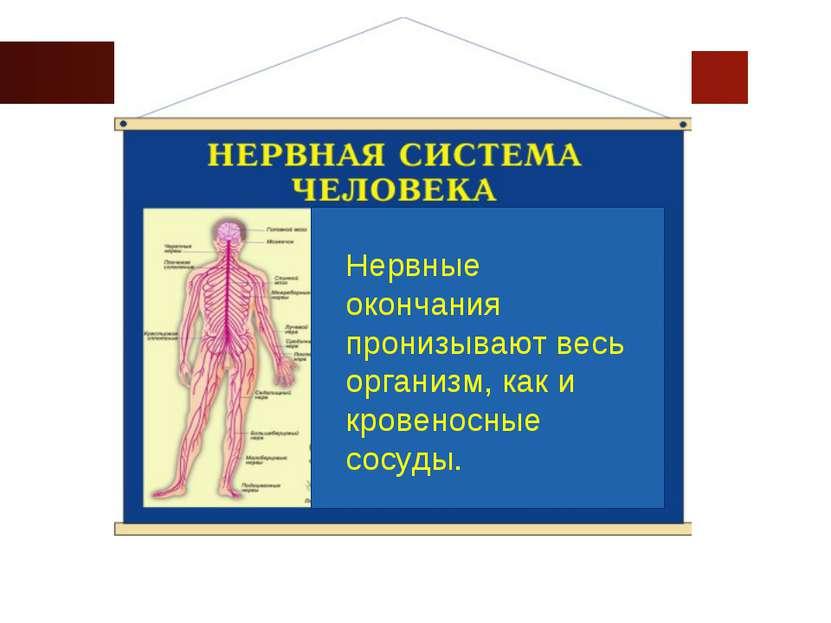 www.themegallery.com Company Logo Нервные окончания пронизывают весь организм...