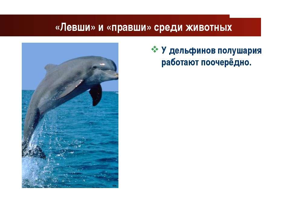 www.themegallery.com Company Logo «Левши» и «правши» среди животных У дельфин...