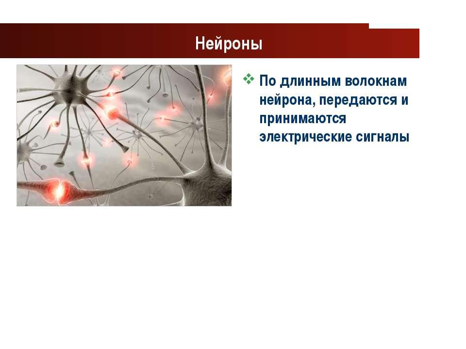 www.themegallery.com Company Logo Нейроны По длинным волокнам нейрона, переда...