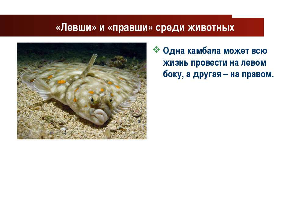 www.themegallery.com Company Logo «Левши» и «правши» среди животных Одна камб...