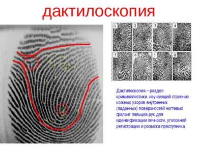 дактилоскопия Дактилоскопия – раздел криминалистики, изучающий строение кожны...