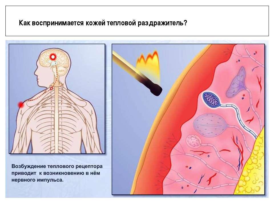 Как воспринимается кожей тепловой раздражитель?
