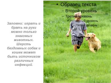Запомни: играть и брать на руки можно только знакомых животных. Шерсть бездом...