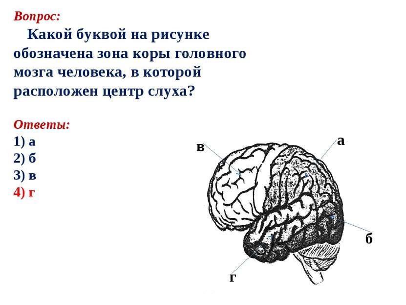 Вопрос: Какой буквой на рисунке обозначена зона коры головного мозга человека...