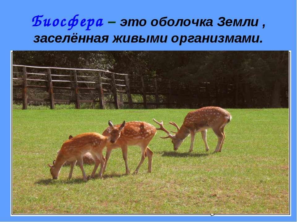 Биосфера – это оболочка Земли , заселённая живыми организмами.