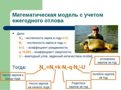 Математическая модель с учетом ежегодного отлова Дано: Nn+1 - численность кар...