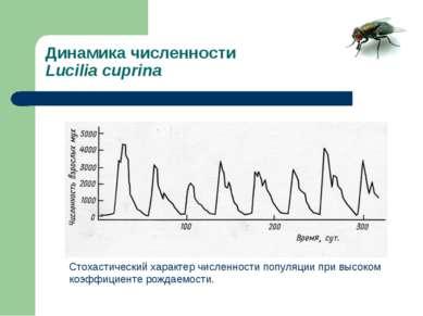 Динамика численности Lucilia cuprina Стохастический характер численности попу...