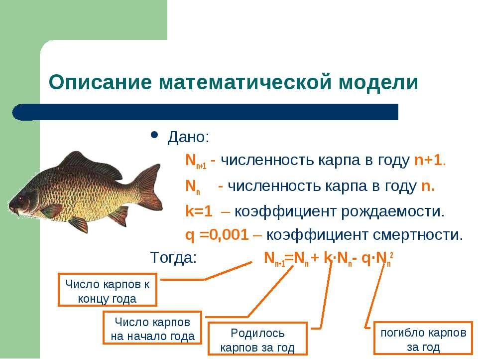 Описание математической модели Дано: Nn+1 - численность карпа в году n+1. Nn ...