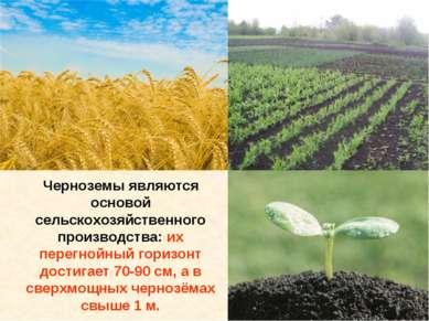 Черноземы являются основой сельскохозяйственного производства: их перегнойный...
