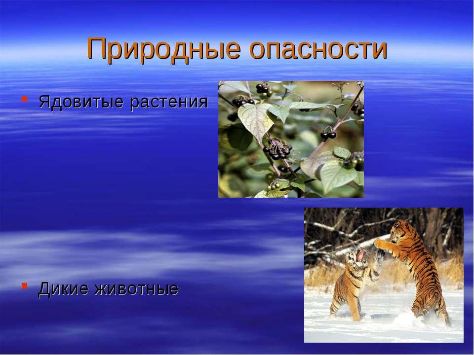 Природные опасности Ядовитые растения Дикие животные
