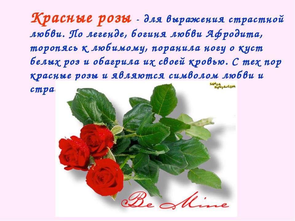 Красные розы - для выражения страстной любви. По легенде, богиня любви Афроди...