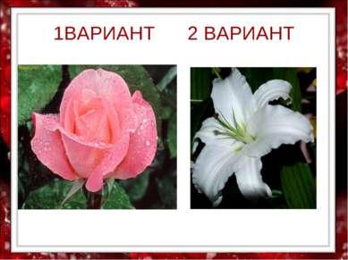 1ВАРИАНТ 2 ВАРИАНТ