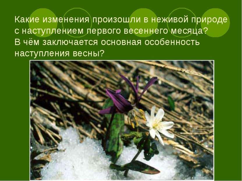 Какие изменения произошли в неживой природе с наступлением первого весеннего ...