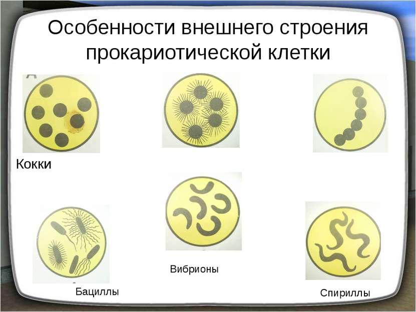 Особенности внешнего строения прокариотической клетки Кокки Бациллы Вибрионы ...