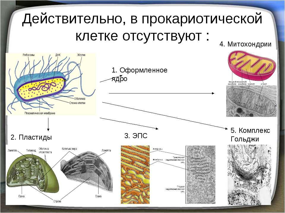 Действительно, в прокариотической клетке отсутствуют : 1. Оформленное ядро 2....