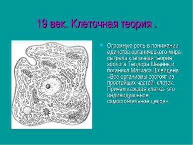 19 век. Клеточная теория . Огромную роль в понимании единства органического м...