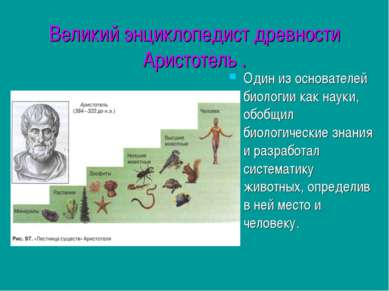 Великий энциклопедист древности Аристотель . Один из основателей биологии как...