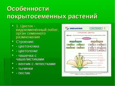 Особенности покрытосеменных растений 1. Цветок - видоизменённый побег, орган ...