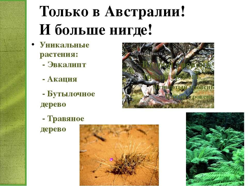 Только в Австралии! И больше нигде! Уникальные растения: - Эвкалипт - Акация ...