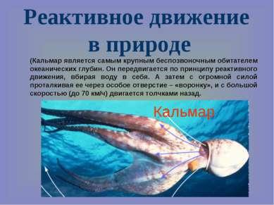 Реактивное движение в природе (Кальмар является самым крупным беспозвоночным ...
