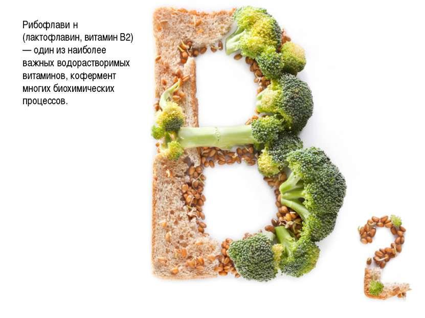 Рибофлави н (лактофлавин, витамин B2) — один из наиболее важных водорастворим...