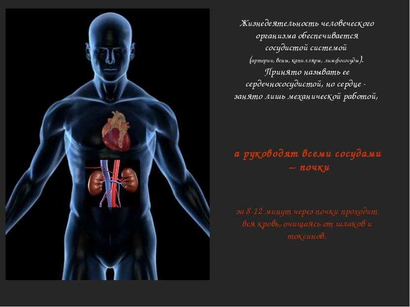 Жизнедеятельность человеческого организма обеспечивается сосудистой системой ...