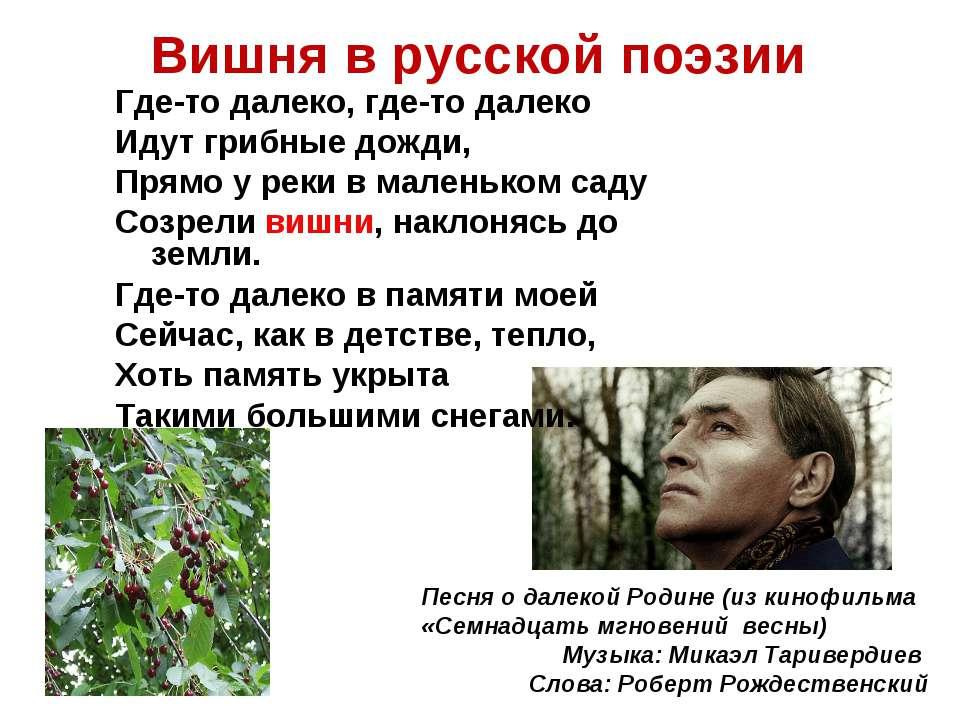 Вишня в русской поэзии Где-то далеко, где-то далеко Идут грибные дожди, Прямо...