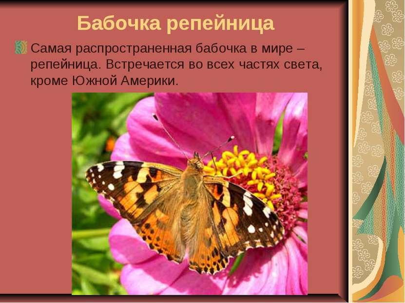Бабочка репейница Самая распространенная бабочка в мире – репейница. Встречае...
