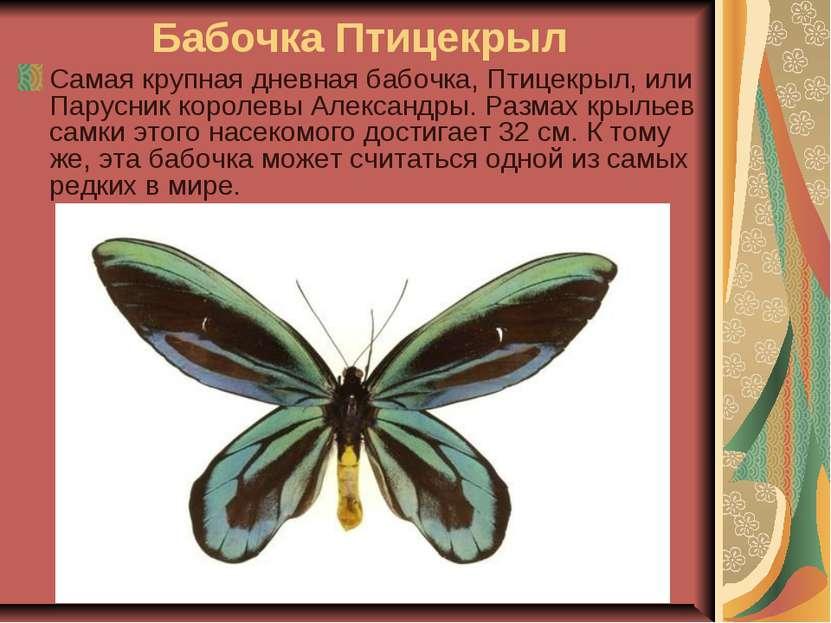 Бабочка Птицекрыл Самая крупная дневная бабочка, Птицекрыл, или Парусник коро...