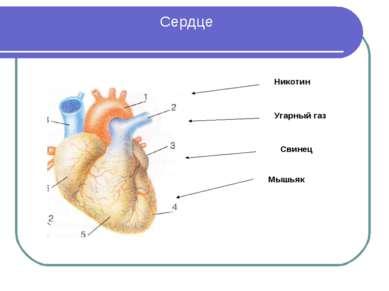 Сердце Никотин Угарный газ Свинец Мышьяк