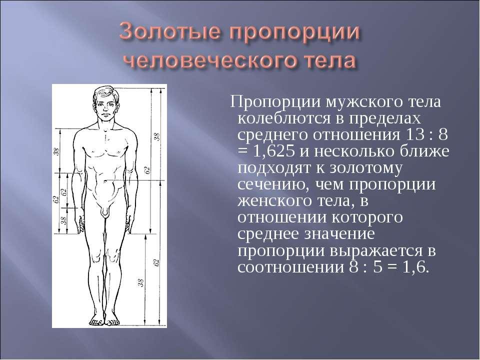 Пропорции мужского тела колеблются в пределах среднего отношения 13 : 8 = 1,6...