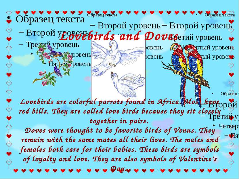 Lovebirds are colorful parrots found in Africa. Most have red bills. They are...