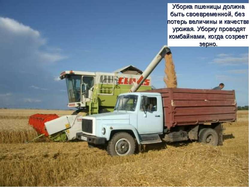 Уборка пшеницы должна быть своевременной, без потерь величины и качества урож...