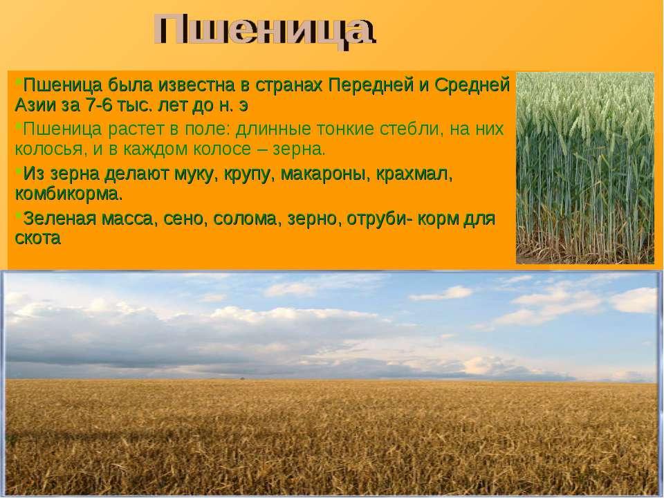 Пшеница была известна в странах Передней и Средней Азии за 7-6 тыс. лет до н....