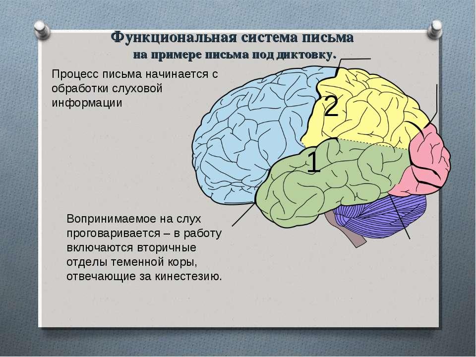 Процесс письма начинается с обработки слуховой информации 1 Вопринимаемое на ...