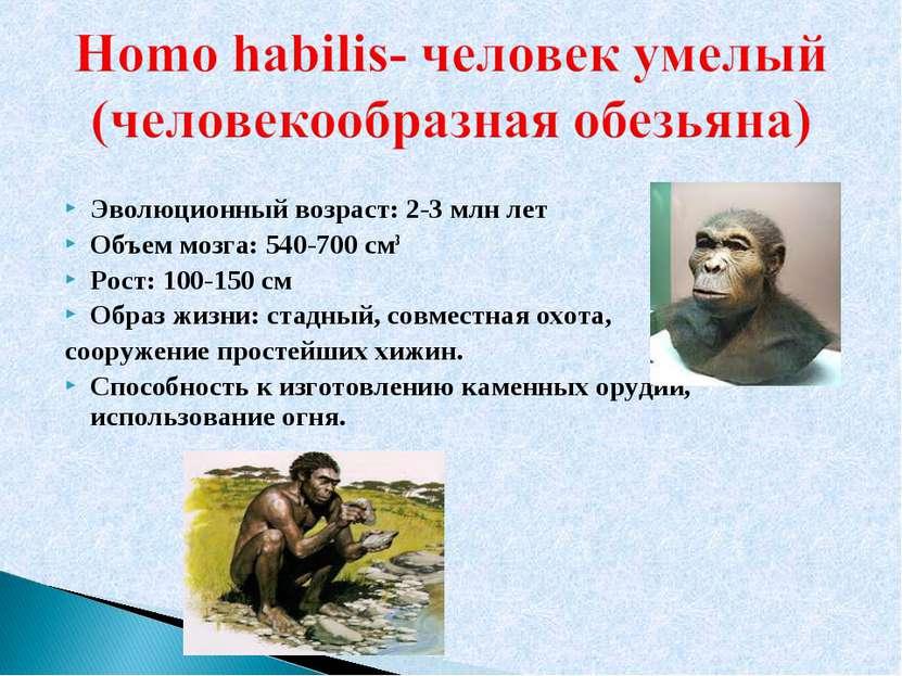 Эволюционный возраст: 2-3 млн лет Объем мозга: 540-700 см3 Рост: 100-150 см О...