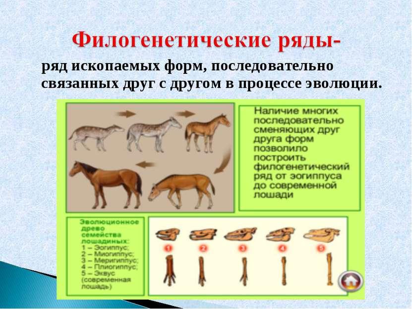 ряд ископаемых форм, последовательно связанных друг с другом в процессе эволю...