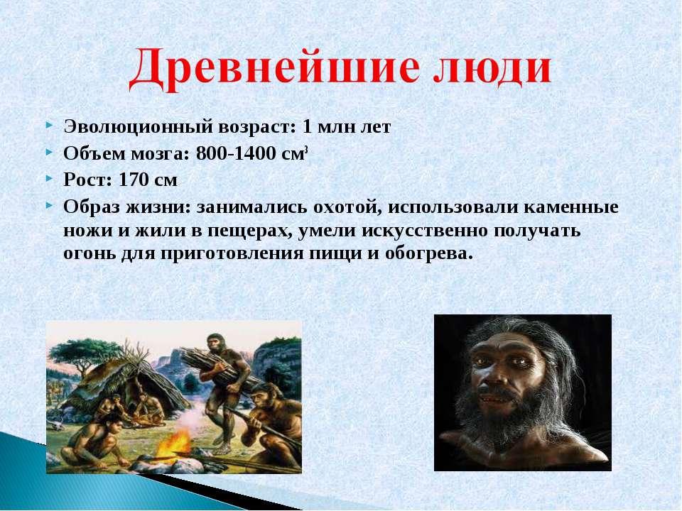 Эволюционный возраст: 1 млн лет Объем мозга: 800-1400 см3 Рост: 170 см Образ ...