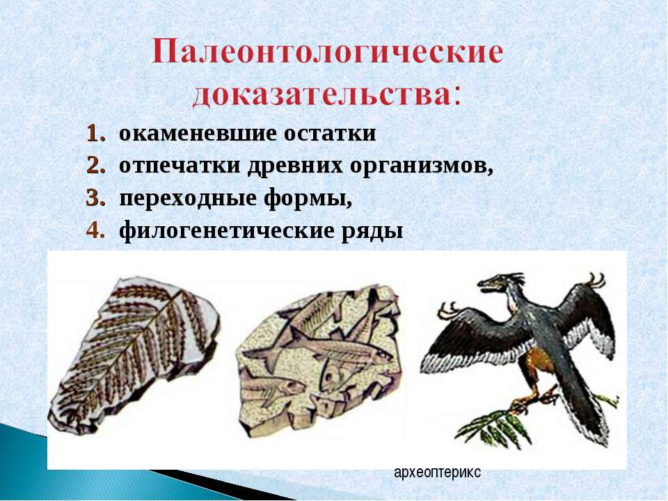 окаменевшие остатки отпечатки древних организмов, переходные формы, филогенет...