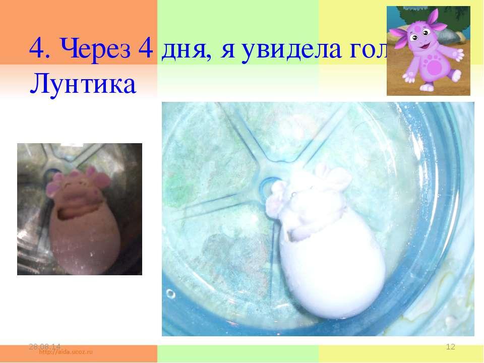 4. Через 4 дня, я увидела голову Лунтика * *