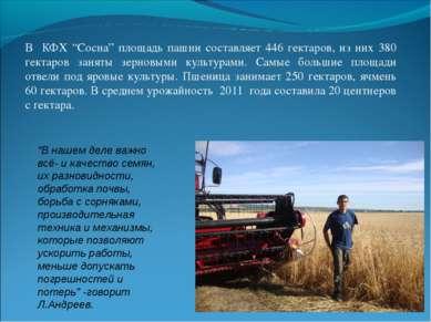 """В КФХ """"Сосна"""" площадь пашни составляет 446 гектаров, из них 380 гектаров заня..."""