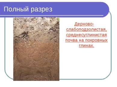 Полный разрез Дерново-слабоподзолистая, среднесуглинистая почва на покровных ...