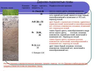 Дерново-подзолистые почвы Изучив строение и морфологические признаки, пришли ...
