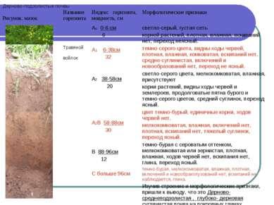 Дерново-подзолистые почвы Рисунок, мазок Название горизонта Индекс горизонта,...