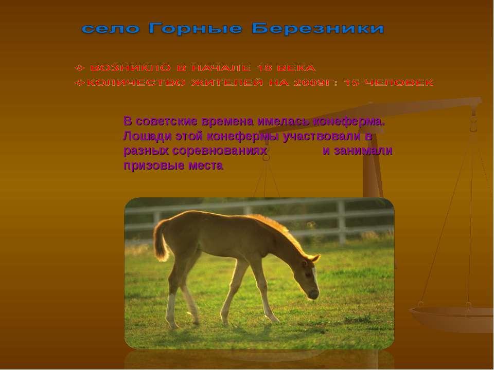 В советские времена имелась конеферма. Лошади этой конефермы участвовали в ра...